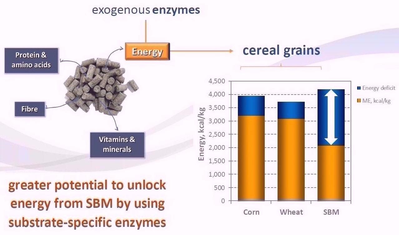 Enzyme Agal Pro giảm tiêu chảy hiệu quả cho thú AGal%20Pro%201